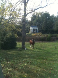Shire horse with the tea house as a backdrop--gorgeous!